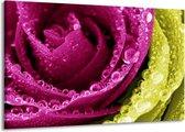 Canvas schilderij Paars   Roze, Groen, Wit   140x90cm 1Luik