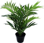 Find the perfect Parlor palm for you on Bol.com