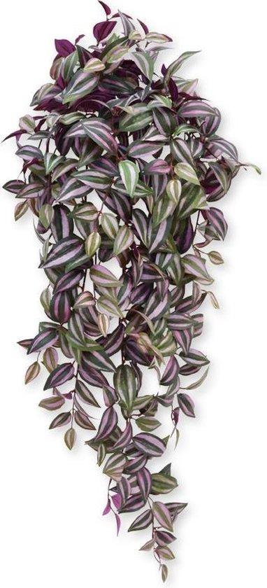 Maxifleur - Tradescantia hangplant 100 cm paars