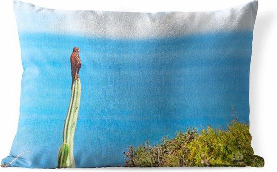 Sierkussen Valk voor buiten - Valk op een cactus bij het strand - 60x40 cm - rechthoekig weerbestendig tuinkussen / tuinmeubelkussen van polyester