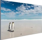 Koningspinguins op het strand Aluminium 60x40 cm - Foto print op Aluminium (metaal wanddecoratie)