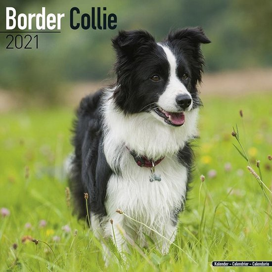 Border Collie Kalender 2021