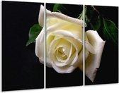 Glasschilderij Roos | Wit, Zwart, Groen | 120x80cm 3Luik | Foto print op Glas |  F000537