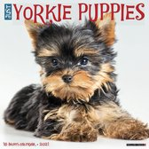 Yorkshire Terrier Puppies Kalender 2021