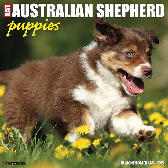 Australian Shepherd Puppies Kalender 2021