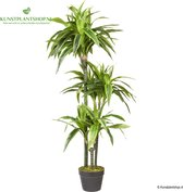 HTT Decorations – Kunstplant Dracaena Lemon Lime H120cm