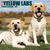 Just Yellow Labs 2021 Calendar