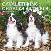 Cavalier King Charles Kalender 2021