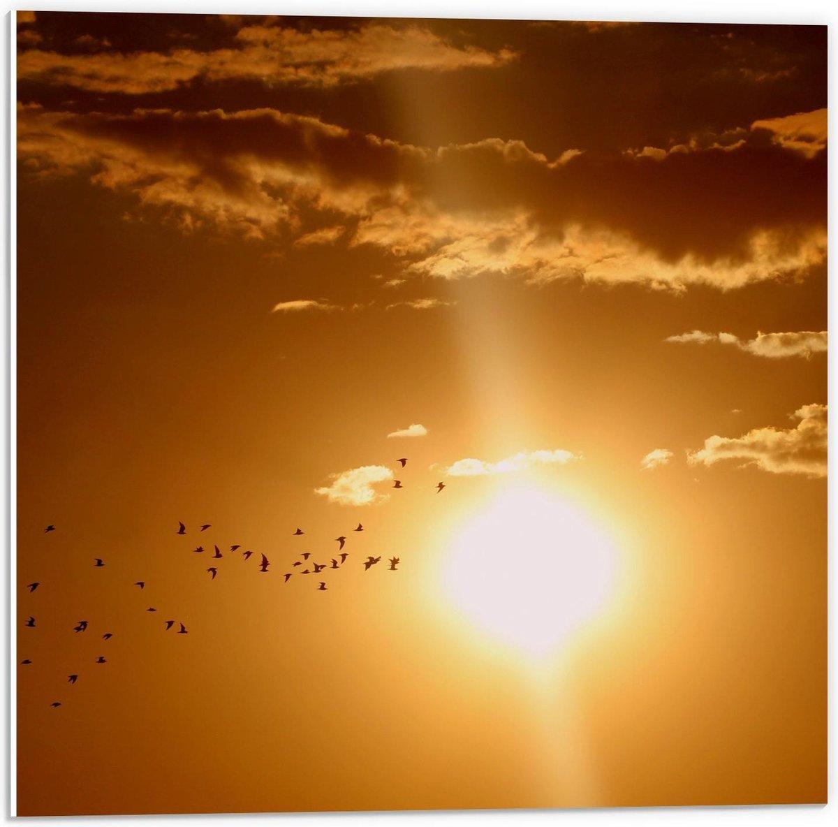 Forex - Vogels bij Zonsondergang - 50x50cm Foto op Forex