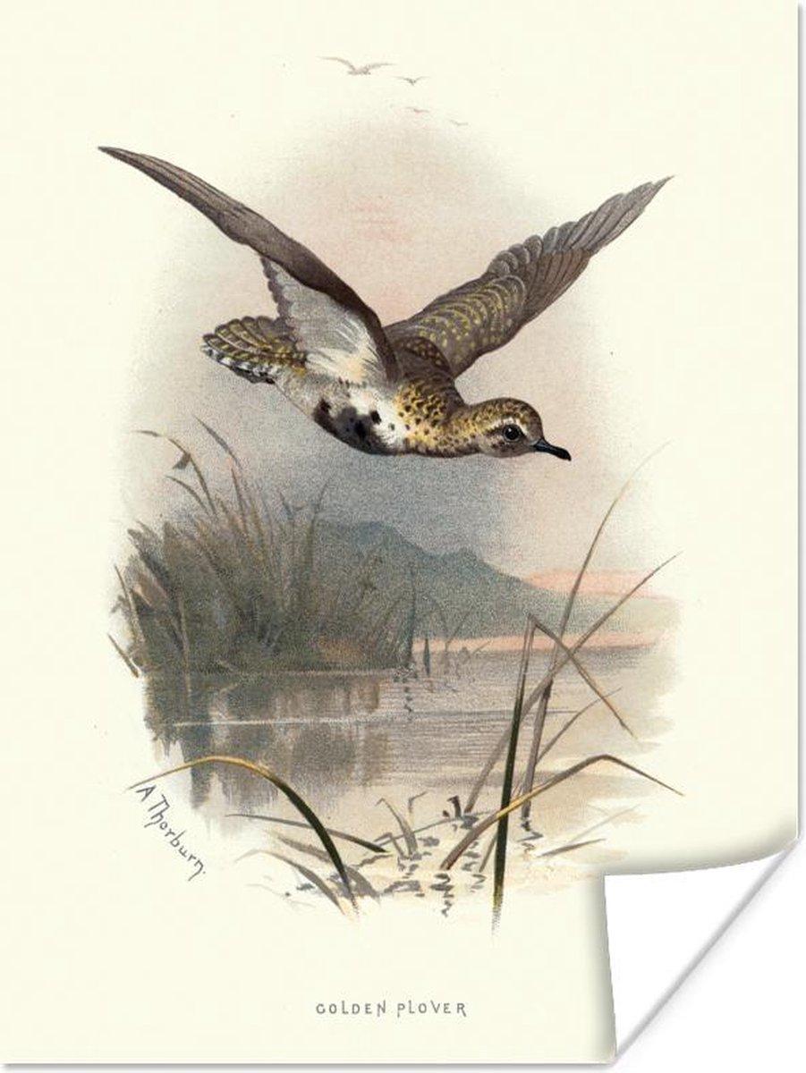 Poster - Antieke vogelprent goudplevier - 30x40 cm