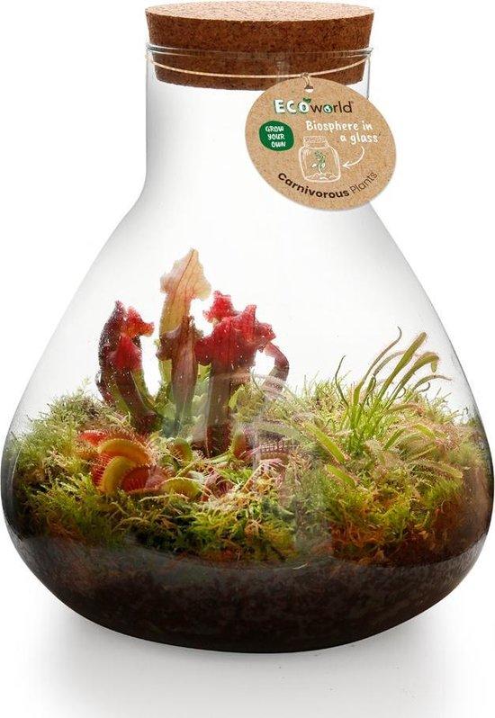 Ecoworld Swamp Biosphere Ecosysteem in Glas - Piramide Glas XL - Ø 30 cm ↕ 36 cm