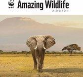 Amazing Wildlife WWF Kalender 2021