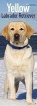 Labrador Retriever Kalender Blond 2021 Slimline