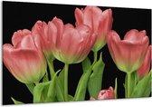 Glasschilderij Tulpen | Rood, Groen, Zwart | 120x70cm 1Luik | Foto print op Glas |  F003197