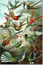 Graphic Message Schilderij op Canvas Kunstformen der Natur - Ernst Haeckel - Vogels Botanisch