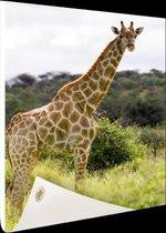 Giraf in de natuur Tuinposter 80x120 cm - Tuindoek / Buitencanvas / Schilderijen voor buiten (tuin decoratie)