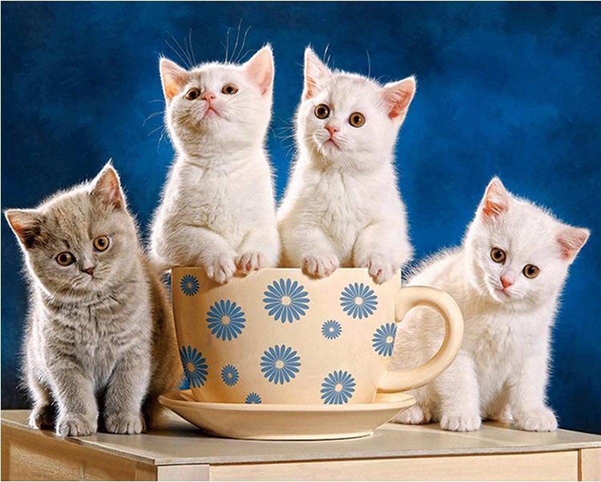 Diamond Painting World™ Kittens in een beker - Diamond painting pakket - volledig bedekt - 30x40cm