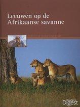 Leeuwen op de Afrikaanse savanne