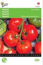 Tomaten St. Pierre - Lycopersicon esculentum - set van 7 stuks