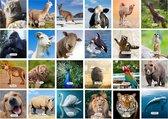Cadeautip! Dieren memory - Educatief memoryspel dieren- Memory spel - 70 stuks