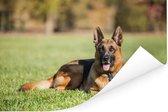 Duitse herdershond ligt op het gras Poster 180x120 cm - Foto print op Poster (wanddecoratie woonkamer / slaapkamer) / Huisdieren Poster XXL / Groot formaat!
