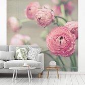 Fotobehang vinyl - Roze boterbloemen in een glazen vaas breedte 280 cm x hoogte 280 cm - Foto print op behang (in 7 formaten beschikbaar)