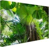 Tropisch regenwoud Canvas 120x80 cm - Foto print op Canvas schilderij (Wanddecoratie woonkamer / slaapkamer)