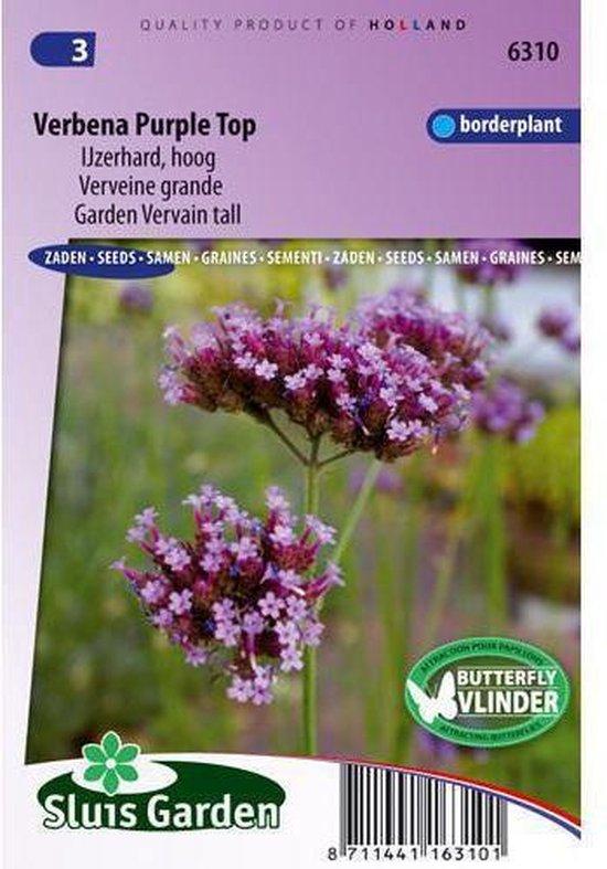 Sluis Garden - Verbena Purple Top (IJzerhard)