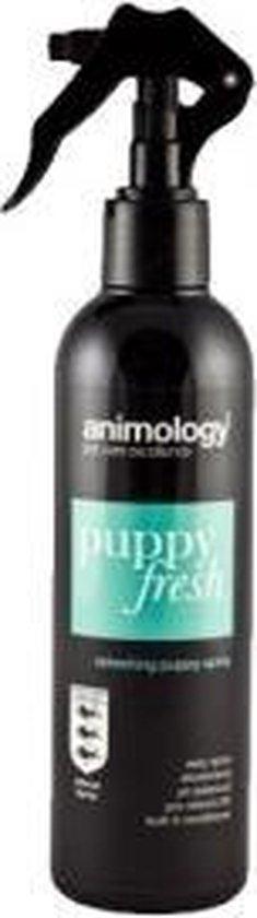 Beste Parfum voor honden - Dit zijn de  4 lekkerste honden parfums!