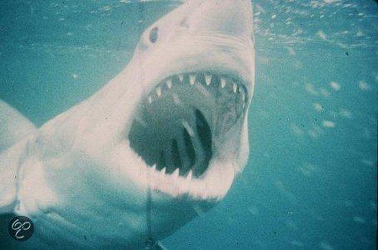 Jaws L.E.