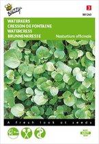 Buzzy - Waterkers - Nasturtium officinalis