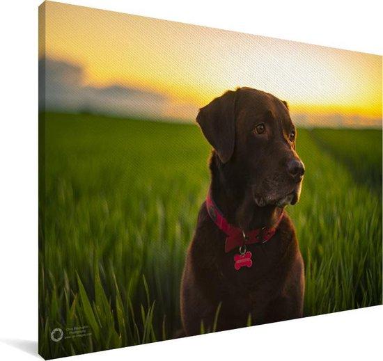 Een Labrador Retriever met zonsondergang Canvas 180x120 cm - Foto print op Canvas schilderij (Wanddecoratie woonkamer / slaapkamer) / Huisdieren Canvas Schilderijen XXL / Groot formaat!