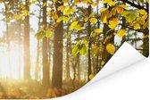De herfstzon schijnt op de bomen Poster 120x80 cm - Foto print op Poster (wanddecoratie woonkamer / slaapkamer)