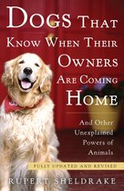 Dogs That Know When Their Owners Are Coming Home