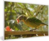 Foto in lijst - Groene prieelvogel eet een aardbei fotolijst wit 60x40 cm - Poster in lijst (Wanddecoratie woonkamer / slaapkamer)