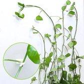 Bindmateriaal planten - Klimhulp - Plantclips - Zelfklevend - Doorzichtig - 30 stuks - Large