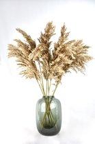 Pampas pluimen - 10 stuks - 70 cm - Natural Dried Flowers - Droogbloemen
