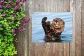 Tuinposter Otter - Otter in het water 80x60 cm - Tuindoek/Buitencanvas/Schilderijen voor buiten (tuin decoratie)