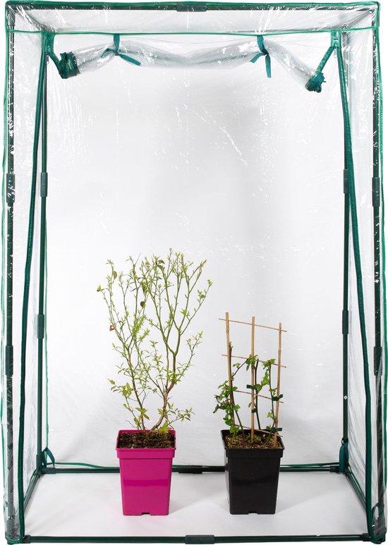 Zindoo Kweekkas – Tuinkas – 150 cm hoog - Broeikas – Tuinieren – Hobbykas – Tomatenplant – Aardbeienplant – Slaplant – Zelf Groenten Kweken – Transparant – Balkonkas – Moestuin – Bloemen – Planten - Kwekerij