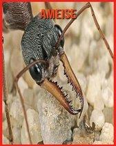 Ameise: Erstaunliche Fakten & Bilder
