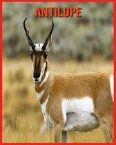 Antilope: Erstaunliche Fakten & Bilder