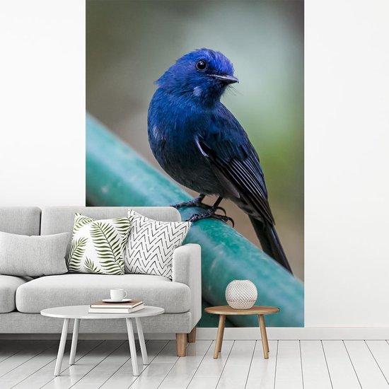Fotobehang vinyl - Azuurvliegenvanger op een groene stang breedte 150 cm x hoogte 220 cm - Foto print op behang (in 7 formaten beschikbaar)