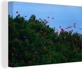 Zwerm rode ibissen bij het bos Canvas 120x80 cm - Foto print op Canvas schilderij (Wanddecoratie woonkamer / slaapkamer)