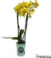 Papicco ART Mondriaan - Orchidee - 4-tak - Phalaenopsis - Geel