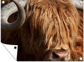 Portret van een Schotse hooglander met gekrulde hoorns Tuinposter 160x120 cm - Tuindoek / Buitencanvas / Schilderijen voor buiten (tuin decoratie) XXL / Groot formaat!
