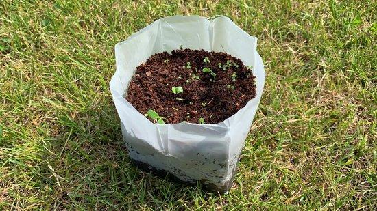 Zadenpakket Eetbare bloemen - Een hart onder de riem