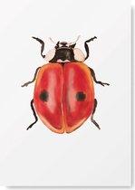 Kunst Poster - Dieren - Lieveheersbeestje  A3 Formaat - Kunst aan de muur - Wanddecoratie