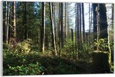Plexiglas –Bomen in het Bos– 60x40 (Wanddecoratie op Plexiglas)