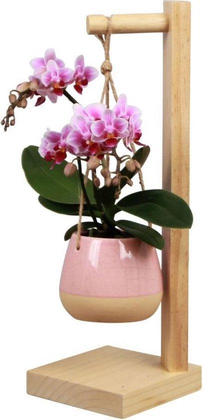 Orchidee | Trésor Pirouette Roze | Living Collection