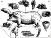 Tuinposter - Illustratie van verschillende stukken vlees van het varken - 40x30 cm